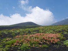 双子山と赤いタイプのメイゲツソウ。御殿場口|富士山登山ルートガイド。Mount Fuji climbing route guide