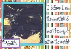 Your Homemade Postcards Can Help Benefit Stray Cat Alliance!