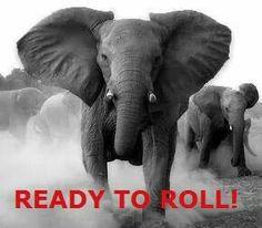 Roll Tide Roll!!!!!!!!