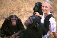 Jane Goodall with the chimps...She loves those chimps, is curious about the...so she has spent her life learning about, and advocating for them. What a life!
