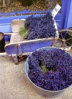 Lavender time in Provence. Lavender gathered and bundled, hung upside down to dry. Done properly, the intense color and perfume are retained.