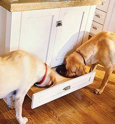 Dez dicas de organização e décor para quem tem animais em casa - Dicas - Casa GNT