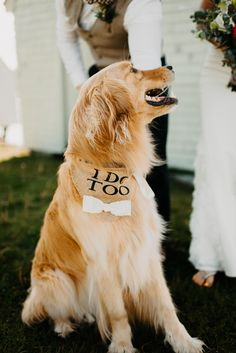 adorable ring bearer ever? I think yes. Incorporating your dog into your wedding is the BEST. Shop Engagement Rings, Vintage Engagement Rings, Golden Retriever Wedding, Perfect Wedding, Dream Wedding, Summer Wedding, Womens Wedding Bands, Dogs In Wedding, Wedding Ideas
