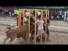 Funny videos 2017 : Stupid people doing stupid things - Bull Fighting