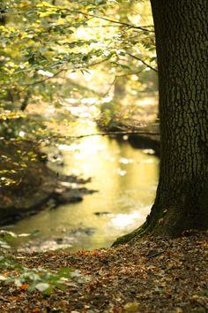 At the River Bank by blackcookieDD.deviantart.com on @DeviantArt