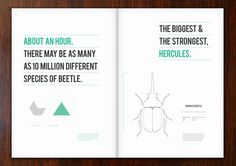 How long is it since someone discovered a new type of beetle?