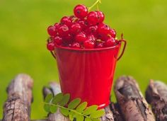 Currants improve mood and boost the immune system Vegetables Photography, Red Fruit, Red Berries, Fruits And Vegetables, Veggies, Nom Nom, Harvest, Food Photography, Lime