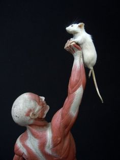 Skinner And Hyde: Taxidermy