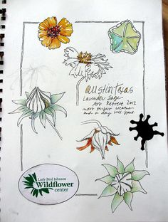 Sketchbook ~ Austin by janelafazio, via Flickr
