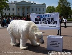 Today Paula bear went to the White House on behalf of more than half a million people who wrote to Obama, demanding an end to oil drilling in the Arctic.   ACT NOW and help get our message heard! Send a tweet to the White House: www.savethearctic.org