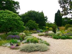 Beth Chatto / garden at White Barn Farm, Elmstead market, Essex - island beds in the gravel garden which used to be the car park. Pebble Garden, Dry Garden, Gravel Garden, Drought Resistant Landscaping, Drought Tolerant Landscape, Amazing Gardens, Beautiful Gardens, Beth Chatto, Mediterranean Garden Design