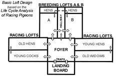 Loft Construction and Design | Pigeon Racing and Racing Pigeons ...