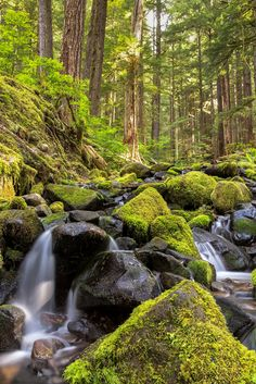Small waterfall area, on route to the Sol Duc Falls Olympic National Park, Washington June 2014