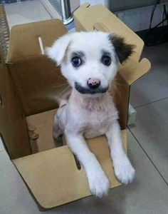 21 Animals Who Were Born With Unbelievable Fur Markings