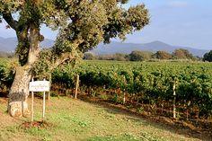 TASTE THE WINE. I vini di Bolgheri ai Salotti del Gusto dell'Alta Badia. Grazie al POGGIO AL TESORO
