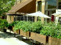 growing plants for restaurant