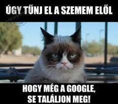 Kptallat a kvetkezre: grumpy cat magyarul felirattal magyarul magyarul magyarul magyarul Humor Mexicano, Meme Comics, Memes Humor, Ecards Humor, Humor Videos, Cat Memes, Grumpy Cat, Animal Jokes, Funny Animals