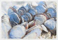 Week 9 - Fiber Paste - Mussels