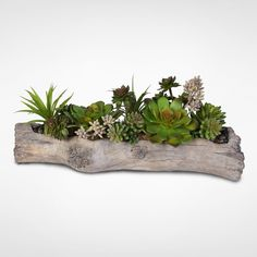 Artificial Succulents with Natural Rocks in a Stone (Grey) Log (Succulents with Natural Rocks in a Stone Log)
