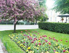 A'la Annn: Summery Helsinki Helsinki, Sidewalk, Plants, Travel, Walkways, Viajes, Plant, Traveling, Pavement