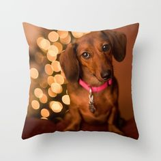 Red miniature dachshund gives a cheeky nod on Christmas Eve. Adorable and heart warming for the doxie lover!
