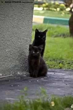 Cats+by+Sv-Batalina.deviantart.com+on+@DeviantArt