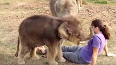 Baby Elephant Touches Woman's Face For First Time, Is Surprised When She Can't Find Her Trunk