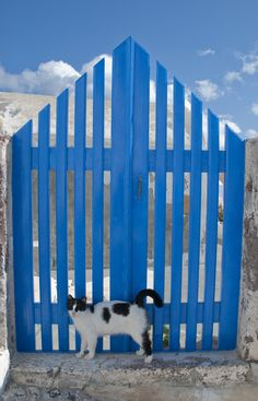 magical-meow:Santorini Cat by Jonybraker A typical blue door in. I Love Cats, Crazy Cats, Cool Cats, Kittens Cutest, Cats And Kittens, Animal Gato, Cat Behavior, White Cats, Beautiful Cats