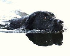 Summer swim by Alan Mattison IPA