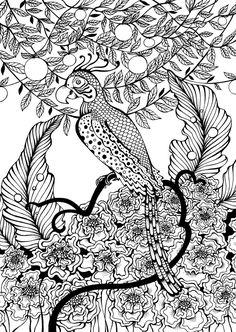 parrot by ira23deviantartcom on deviantart