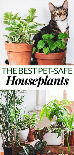 - House Plants - The Best Pet Friendly Houseplants You can still fill your home with plants even if you have a dog or cat! Start with this list of the best pet friendly houseplants to keep your furry friends safe and to make your home beautiful. Best Indoor Plants, Cool Plants, Outdoor Plants, Indoor Garden, Best Plants, Indoor Pets, Shade Plants, Outdoor Gardens, Easy House Plants