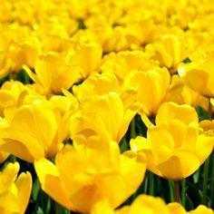 pinterest:allisonnickel2000 board: flowers
