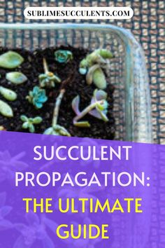 If you want to get more succulent or cacti plants, you probably want to know more about propagation. Here's an ultimate guide for succulent propagation plus some miscellaneous pieces of advice regarding propagation. See it here!  #succulents #cacti #indoorgardening #outdoorgardening #gardeningtips #propagate #succulentpropagation