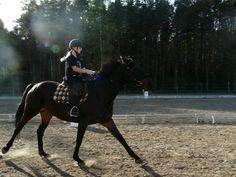 Please vote for this entry in Noworoczny konkurs fotograficzny. Horses, Animals, Animales, Animaux, Animal, Animais, Horse