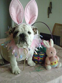 Happy Easter from debbiesbulldogs.com