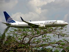 BIG BIRD IN A TREE     ;Copa Airlines llegando a la Habana, Cuba.