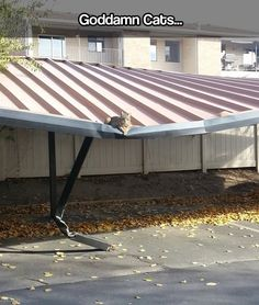 Further proof that cats don't really care #funny
