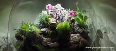 BiOrbAir Review - Growing Miniature Orchids in the BiOrbAir (part twenty-two) - Pumpkin Beth Orchid Terrarium, Terrarium Plants, Flowering Plants, Planting Flowers, Miniature Orchids, Bottle Garden, Leaf Coloring, Different Flowers, Flourish