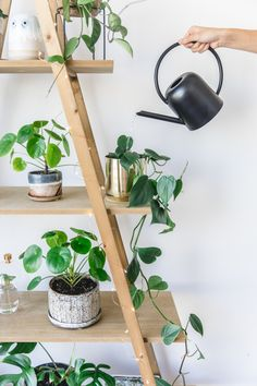 Indoor plant guide – 5 beginner plants you can't kill Indoor House plants guide – beginner plants you can't kill 7 Big Plants, Shade Plants, Plants Indoor, Inside Plants, Patio Plants, Indoor Planters, Tropical Plants, Potted Plants, Things To Do Inside