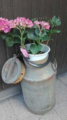 Tonkka ja hortensia
