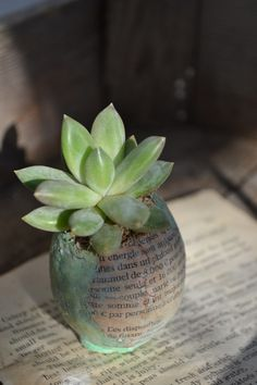 Gifts for guests - Succulent in a cracked egg coated with book page. LOVE!!