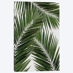 Palm Leaf III Canvas Print #ORA176} by Orara Studio Canvas Wall Art
