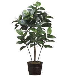 "Bloom Room Luxe 4"" Rubber Plant in Metal Planter-Green"