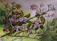 Apfelblüte in Schloßau, Mudau, Buchen, Odenwald.Von Günter Stadler