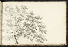 Joseph Mallord William Turner 1775-1851  Study of a Tree, with a Line of Trees Beyond  circa 1789  Pencil and watercolour on paper  support: 160 x 250 mm  Tate D00019  Turner Bequest II 8