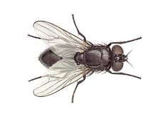 Tried tonight on 100's of flies sitting on my patio. Dropped most of them instantly and stunned the others. Sprayed around door frames to help keep them from entering the house.    Quick Fly Spray: 18 oz white vinegar,  2 Tbsp dish washing soap. Mix in a 20 oz spray bottle and shake gently until well blended.