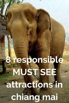 A list of eight responsible alternatives to the Tiger Temple & Kingdom, plus how to be more responsible and avoid the truth behind the worst attractions near Chiang Mai.