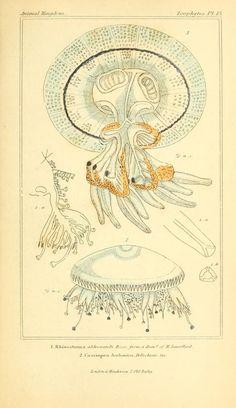 The Animal Kingdom, Cuvier, Latreille, & McMurtie, 1834.