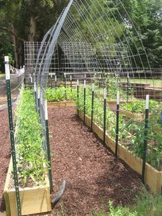 My jungle of tomatoes could use this!!  ( Next year)