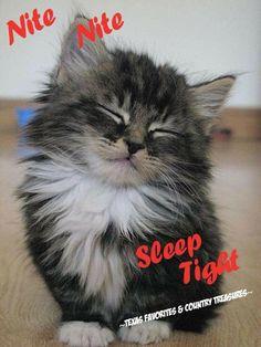 Good Night Sleep Tight my friend! Good Night Funny, Good Night I Love You, Good Night Sleep Tight, Good Night Friends, Sweet Night, Good Night Wishes, Good Night Sweet Dreams, Good Night Image, Good Morning Good Night
